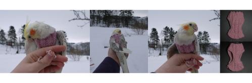Ribbestrikket genser til nymfeparakitt